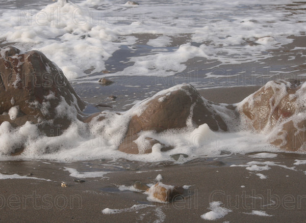 Bude8 